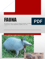 power poent  fauna i