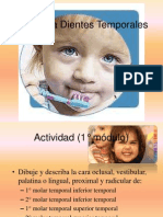 anatomadientestemporales-100927223818-phpapp01