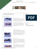 Hormigas_ Tipos de Hormigas
