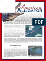 American Alligator Brochure