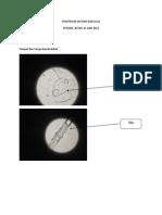 Praktikum Diatom Dan Alga