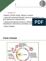 Clase 3.División celular_Leyes de Mendel