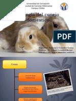 Biología del conejo domestico
