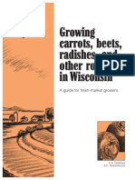 Growing carrots and other root crops