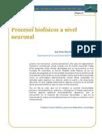 Procesos Biofisicos a Nivel Neuronal