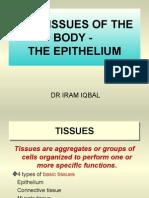 Epithelial Tissue 2003
