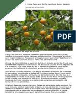 Baga de Macaco - Posoqueira acutifolia - Uma fruta prá bicho nenhum botar defeito.pdf