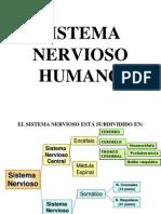 Sistema Nervioso Humano-II