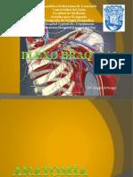 Plexo_braquial_presentacion_2[1].pptx