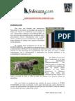 Curso Basico Adiestramiento Perros