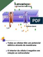 potencial-de-ao-bio-1218249921157705-9