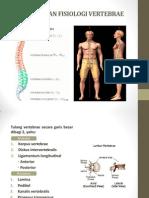 Anatomi Dan Fisiologi Vertebrae