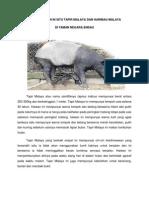 Pemuliharaan in Situ Tapir