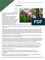 Mancare.ro-turmericul in Terapia Naturista