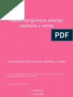 Diapositivas de Vasos Sanguneos Arterias Capilares y Venas.