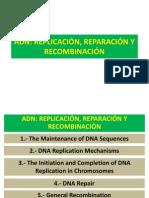 5. Genética. ADN_REPLICACIÓN  REPARACIÓN Y RECOMBINACIÓN