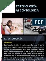 EXPO Entomologia