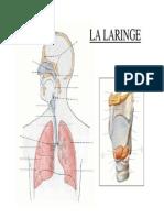 Documento3 laringe