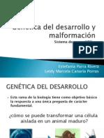 Genética del desarrollo y malformaciones