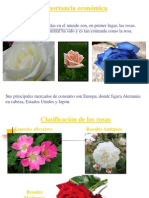 Micropropagación de rosas