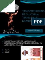 Transportadores de Glucosa a Traves de La Membrana