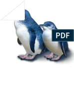 Penguin Pics