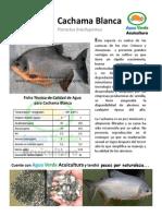 Cachama.pdf