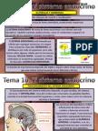 Tema 10. Sistema Endocrino