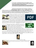 Valoracion y Practica de La Medicina Maya Desarrollada