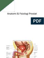 Anatomi & Fisiologi Prostat