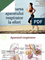 adaptarea aparatului respirator la efort