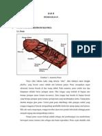 Anatomi Genital Pria