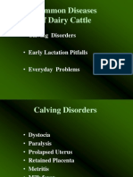 Common Diseases of Dairy Cattle .Ppt