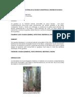 Comportamiento estructural de la Guadua Angustifolia - Caori Takeuchi.pdf