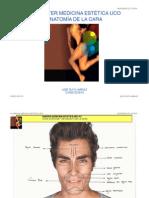 Anatomia Cara Rufo Web