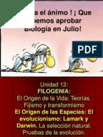 13-02-Filogenia