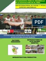 Exposicion Seminario Paiche Consejo Amazonico