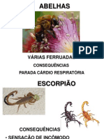 Palestra de Animais Peçonhentos Enf.silvia