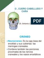 Cráneo, Cuero Cabelludo y Cara