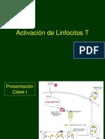 Activacion de Linfocitos T y B_1