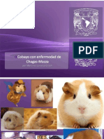 Cobayo Lab Chagas