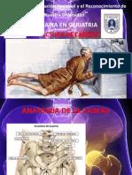 Fx de Cadera Terapia en Geriatria