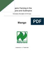 mango farming.............................
