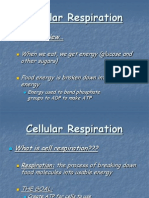 #4Cellular Respiration