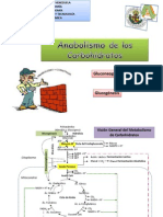 Anabolismo+de+los+carbohidratos