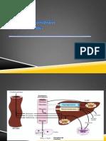 A-Karbohidrat & DM KImia klinik.pdf