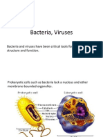 Bacteria+and+Viruses