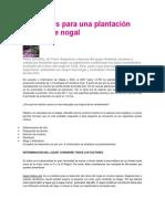Las claves para una plantación exitosa de nogal.docx
