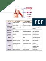 klasifikasi otot