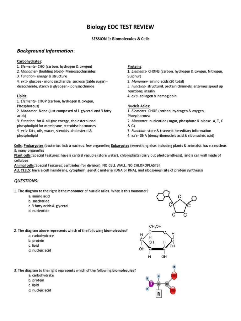 Eoc Review Dna Dominance Genetics